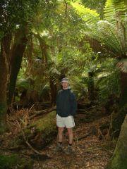 Tasmania - rain forest