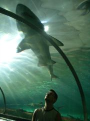 Sydney - sharks