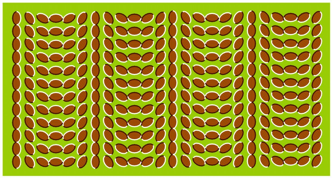 Moving Optical Illusions Eye Tricks